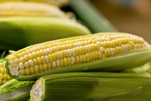 Biotechnology reduces food prices