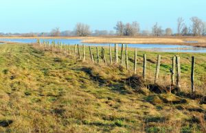 Meadow with a fence next to a lake